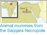 https://sciencythoughts.blogspot.com/2019/02/animal-mummies-from-saqqara-necropolis.html