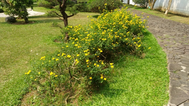 Taman Jepang