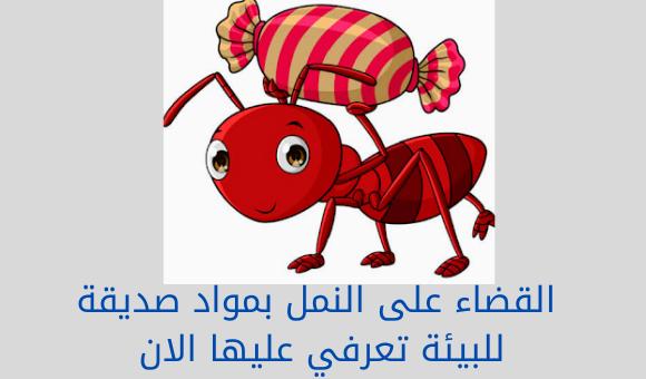 القضاء على النمل بمواد صديقة للبيئة تعرفي عليها الان
