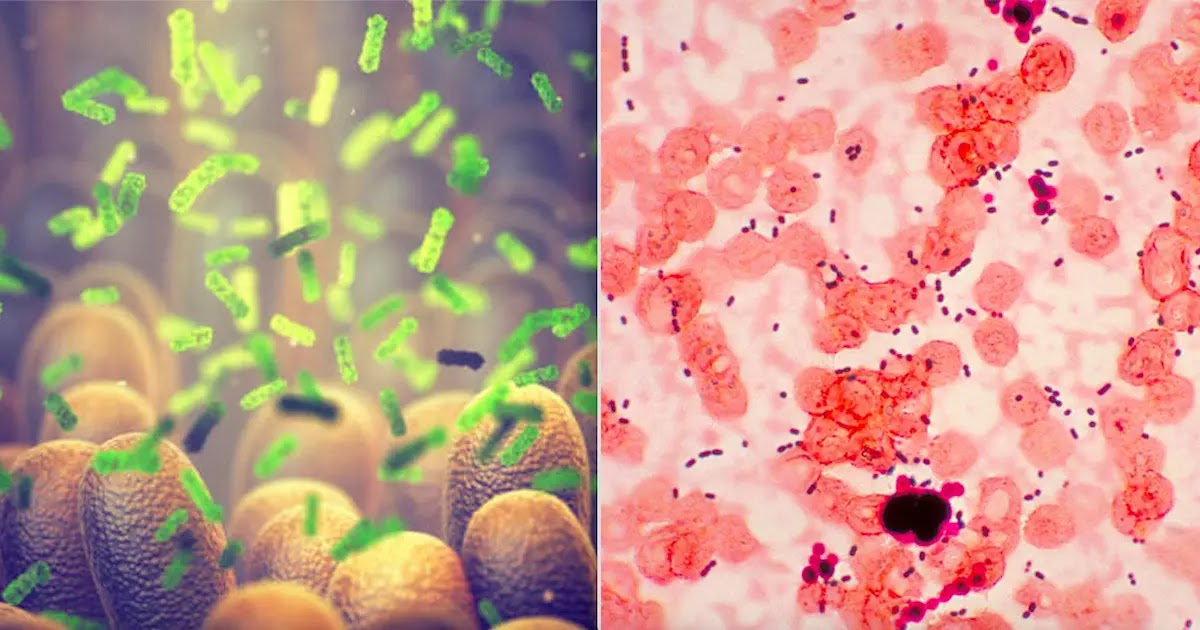 New Research Shows That Human Ageing May Be Reversed Using Fecal Transplant Technology