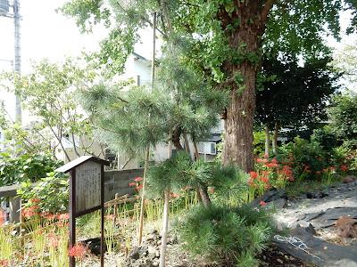 御崎神社:源軍物見の松