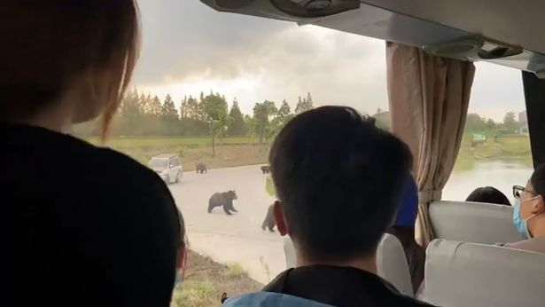 Zoo worker mauled to death by bear in front of tourist bus in 'wild beast area'