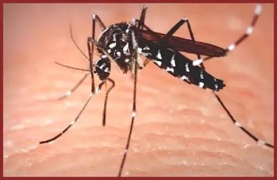 metode naturale de alungat tantarii fara insecticide