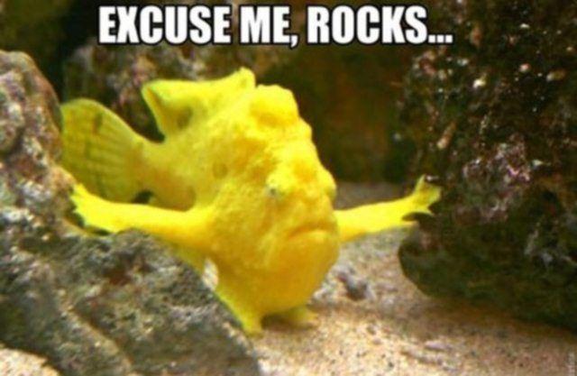 funny jelly fish memes