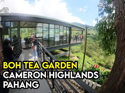 Boh Tea Garden Cameron Highlands
