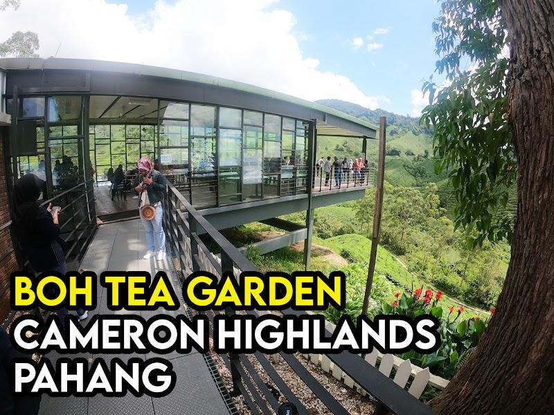 Aktiviti dan Tarikan Di Boh Tea Garden Cameron Highland Pahang