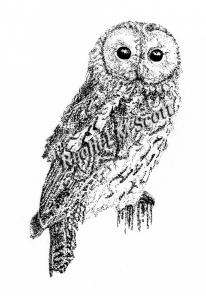 Tawny Owl stipple illustration by Rachel M Scott