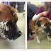 OMG: Poor dog injuries after run-in with porcupin