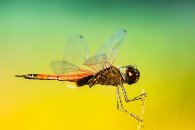 Insect Wings Inspire German Scientists to Develop Advanced Flight Systems