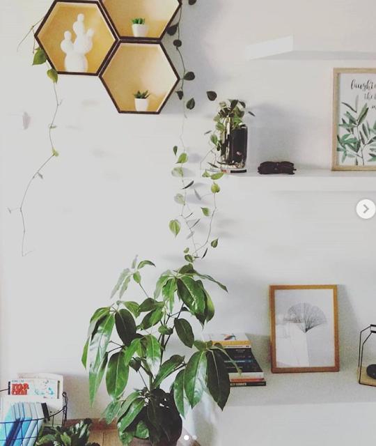 Urban jungle | Rośliny w mieszkaniu | Domowe inspiracje ♥