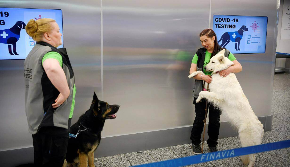 finlandia-menyebarkan-anjing-pelacak-covid-19-di-bandara