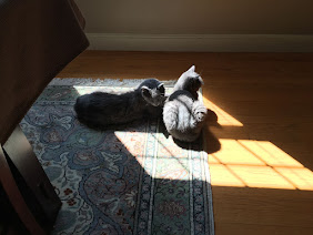 Rest in Peace Boo and Scout - we miss you dearly.