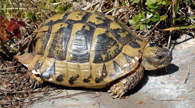 Έτσι αποζημιώθηκε οδηγός που τράκαρε εξαιτίας χελώνας σε δρόμο ταχείας κυκλοφορίας