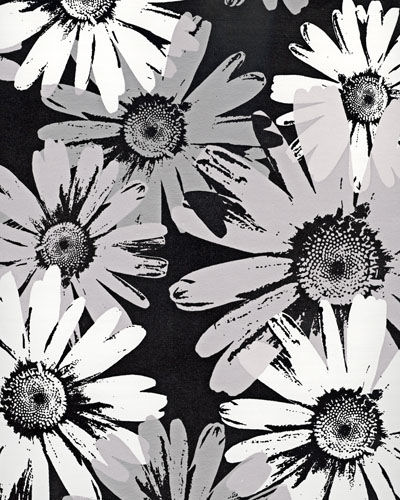 Black And White Wallpaper Evolution Wallpapers