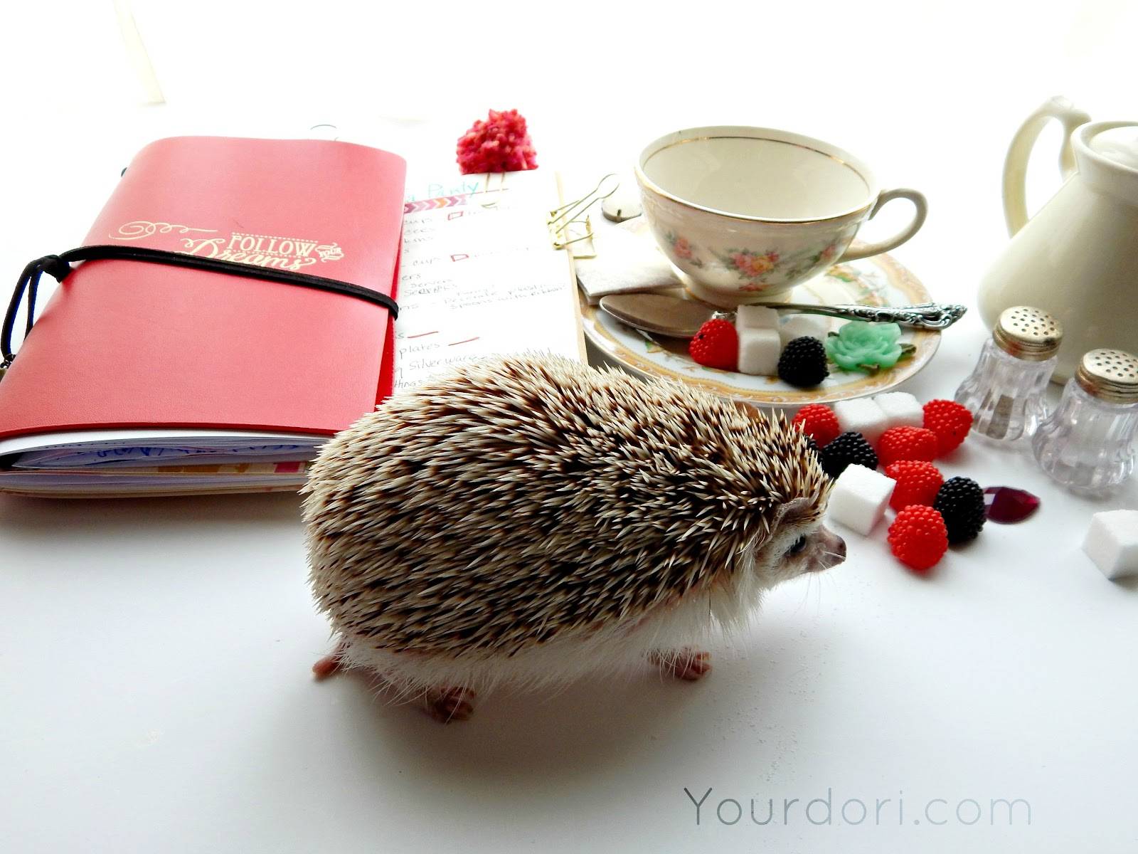 Cute Hedgehog, Planners, Lists, List Making, Gold Bulldog Clips, Midori, Travelers Notebook