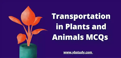 Mcq on Transportation in Plants and Animals Class 10
