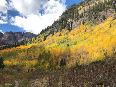 Aspens in color, Rocky Mountains