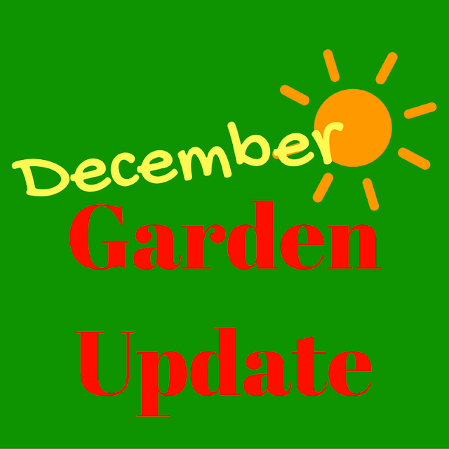 December Garden Update