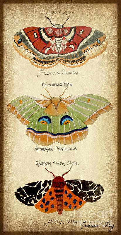 Conscious Art Studios Luna Moth Her Gift And Symbolism