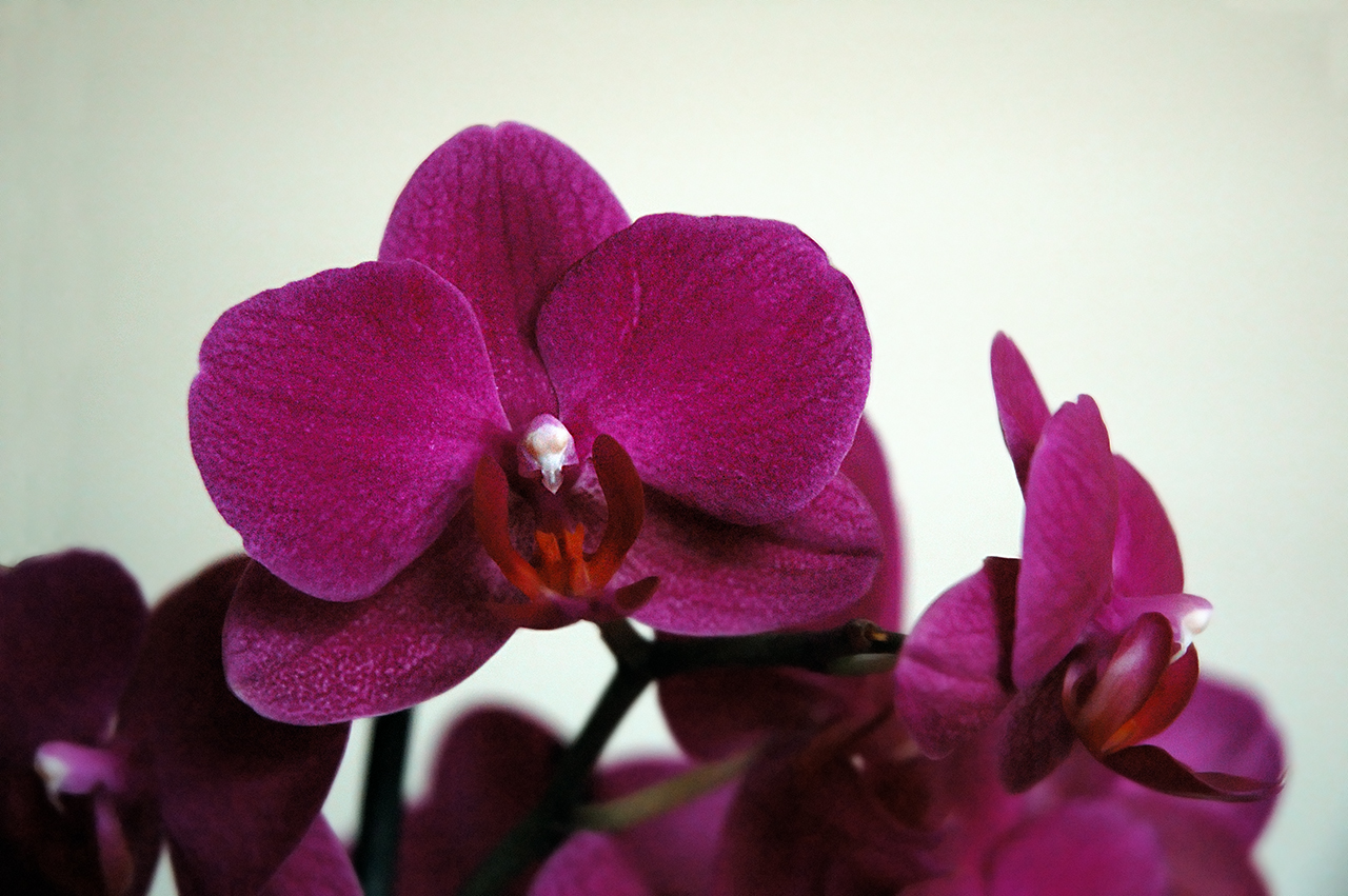 Orchids in Barcelona