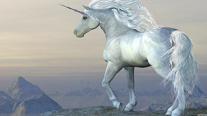 benarkah unicorn hidup di laut  belajar sampai mati