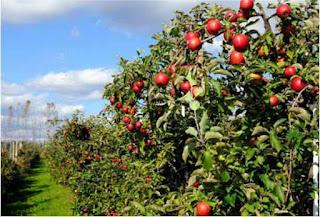 Wisata Ke Taman Apel