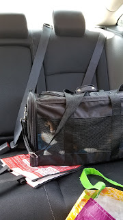cat in a mesh carrier in backseat of car