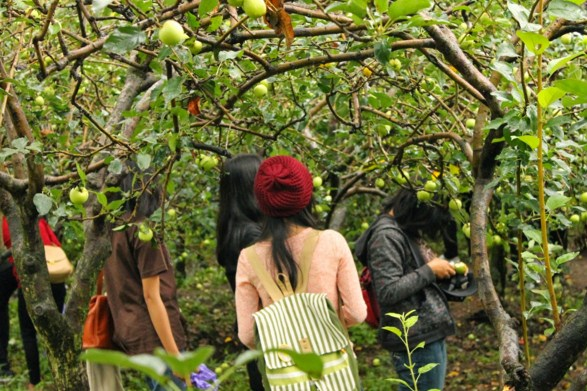 Air Terjun Coban Rondo, Wisata dengan Wahana yang Menantang Air Terjun Coban Rondo, Wisata dengan Wahana yang Menantang Air Terjun Coban Rondo, Wisata dengan Wahana yang Menantang Air Terjun Coban Rondo, Wisata dengan Wahana yang Menantang