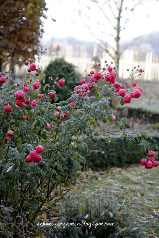 Winterschlaf Ein Schweizer Garten Bloglovin