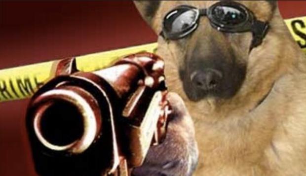 dog shoots hunter indiana