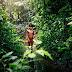 Our Vanishing World: Rainforests
