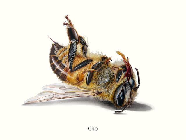abeille dessinée aux crayons de couleur portant la légende Cho