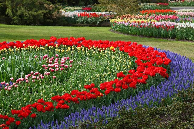 plant-field-lawn-meadow-flower-tulip-1153098-pxhere.com.jpg