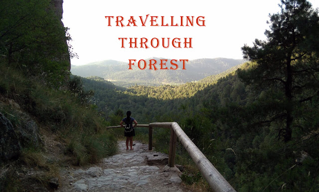 travelling-through-forest