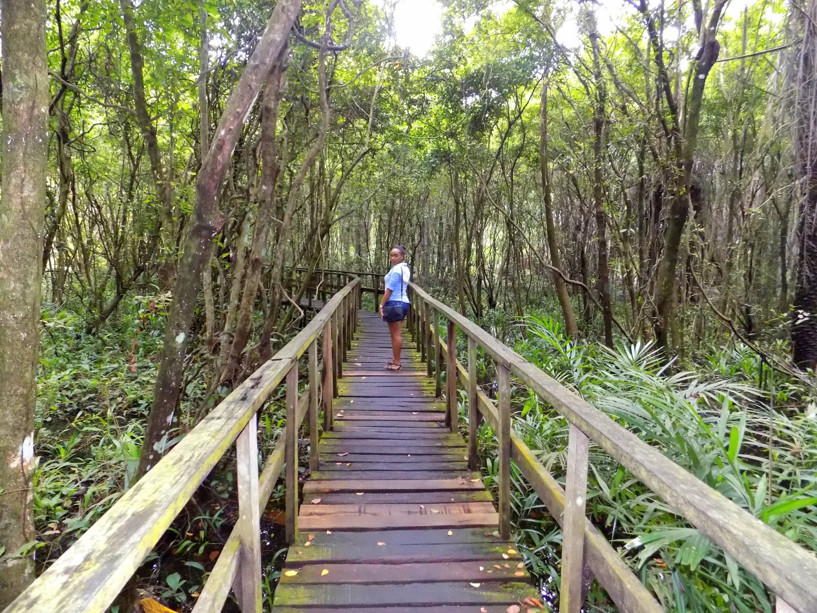 Image result for Lekki Conservation Center Africa's Longest Canopy Walkway