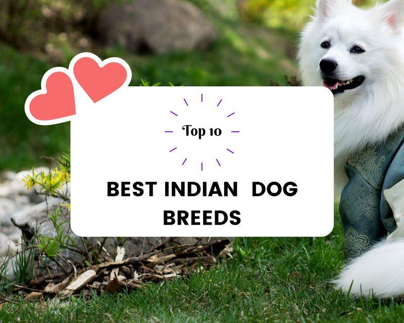 Top 10 Best Indian Dog breeds