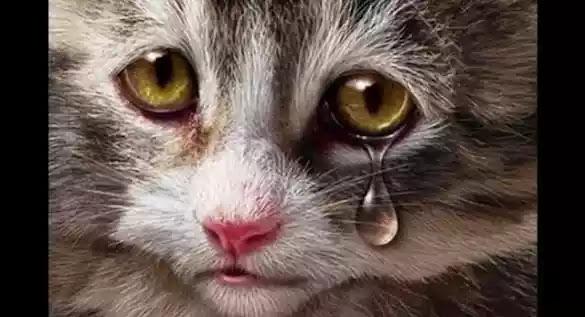 Masya Allah Jika Kamu Didekati Kucing, Berarti Ada 3 Pertanda Ini Dari Allah. Ketahuilah