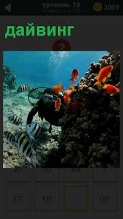 Аквалангист под водой занимается дайвингом, вокруг него плавают рыбы оранжевого цвета