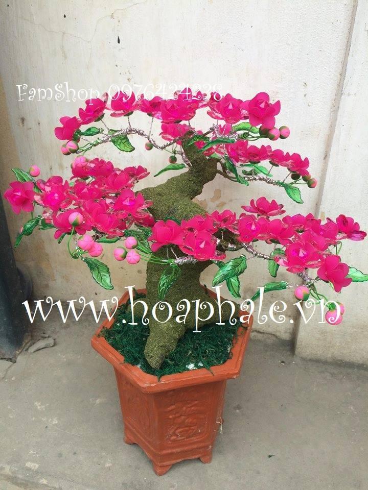 Goc bonsai mai dao cay hoa dao tai Chua Lang