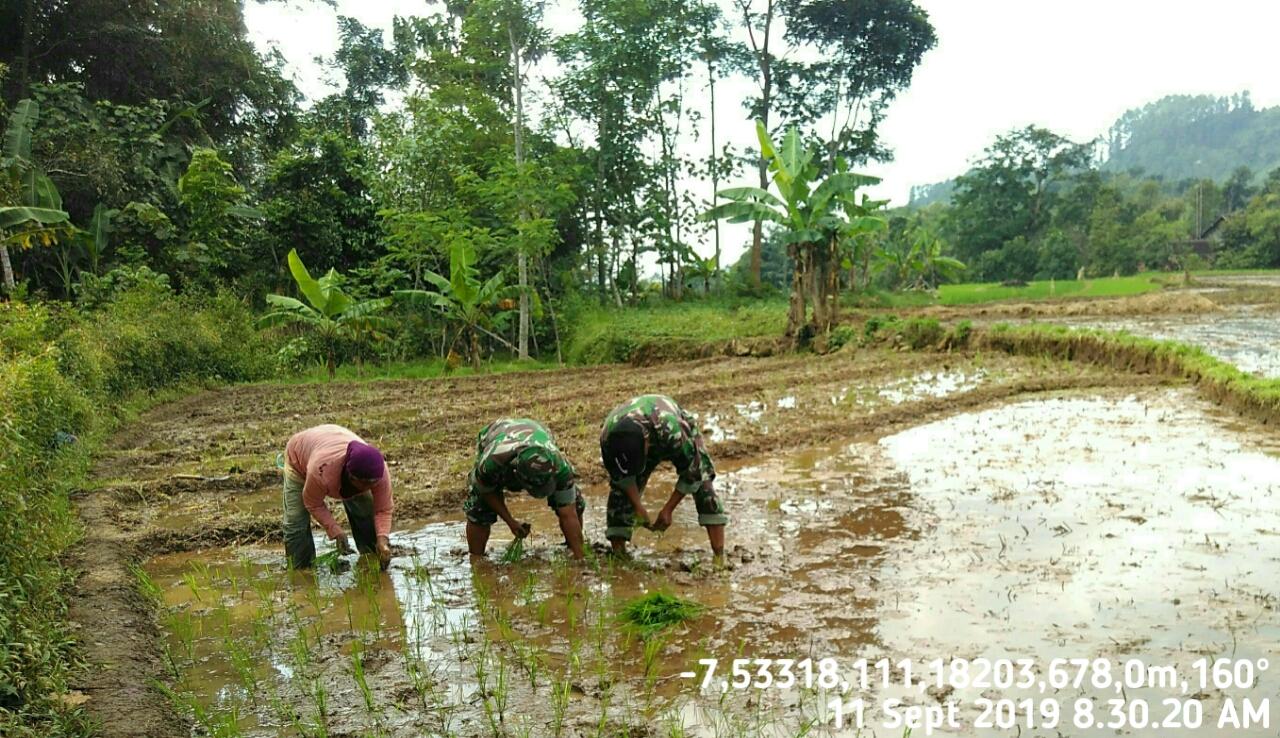 Biarpun Panas Matahari Menyengat, Anggota Koramil 0805/10 Sine Tetap Semangat Bantu Petani