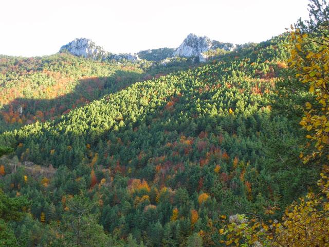 fagedes, colors de tardor, els boscos més bonics de Catalunya a la tardor, paisatges de tardor, Berguedà
