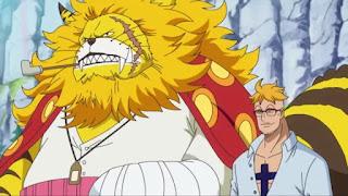 Fakta Marco One Piece