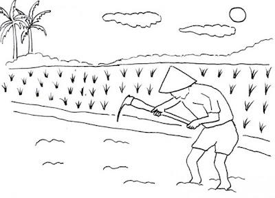 contoh gambar pemandangan sawah