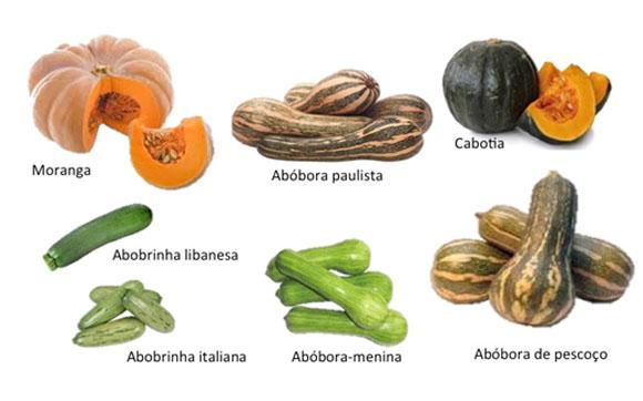 Como identificar que tipo de abóbora ou abobrinha é?