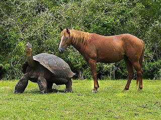 kura-kura-terbesar-di-dunia.jpg