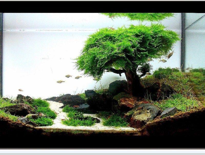 Aquascape Images