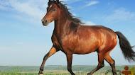 Cavalos: por que essa é a forma de medir a potência do motor de um carro?