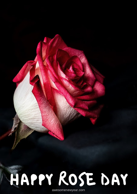 Happy-Rose-Day-Pictures