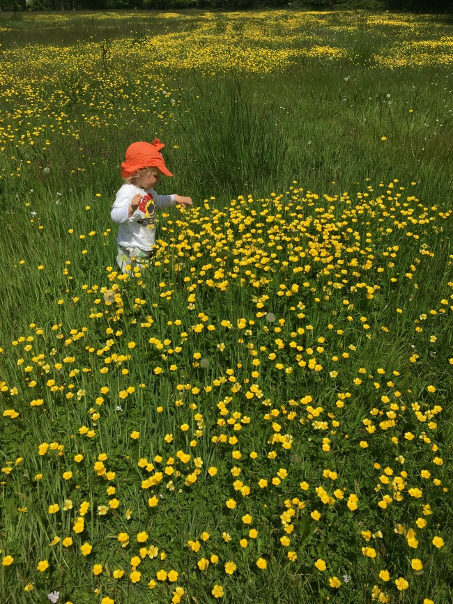 toddler-in-field-of-buttercups