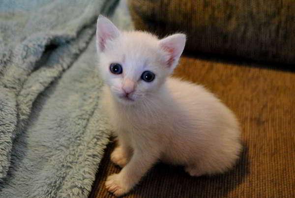 gatito en adopción 2